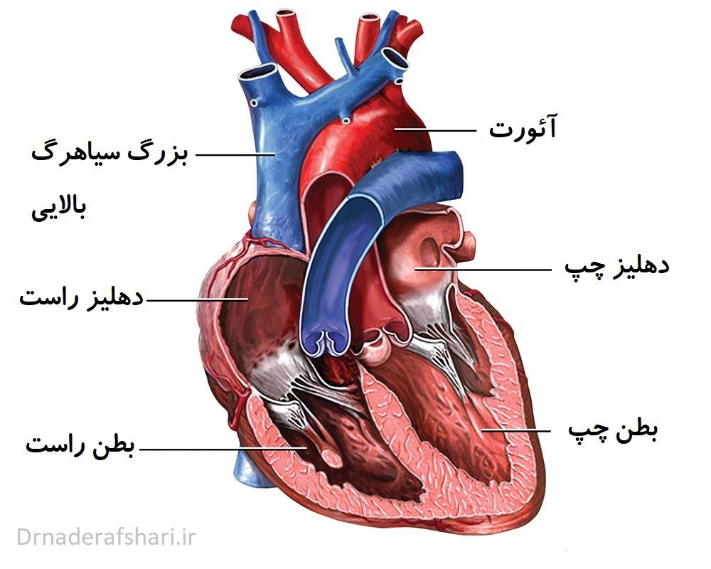 تپش قلب - شناخت اجزای قلب